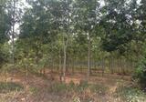 ขายที่ดินพร้อมสวนยางพาราขนาด 17 ไร่ 3 งาน 43 ตารางวา จังหวัด สงขลา อำเภอ สะเดา  ราคา 11.5 ล้าน - DDproperty.com