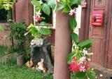 ที่พักกึ่งรีสอร์ท ท่ามกลางธรรมชาติ ต้นไม้ ดอกไม้ที่ร่มรื่น เงียบสงบหนีความวุ่นวาย - DDproperty.com