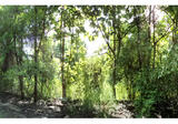 ขายที่ดินโครงการบ้านสวนเชิงดอยรีสอร์ท  ID: 01-88-04337 - DDproperty.com