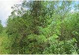 ขายที่ดินโครงการสวนเกษตรอัมพวัน ID: 01-88-05657 - DDproperty.com
