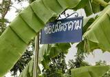 ขายที่ดิน 62 ตรว. ห่างจากพุธทมณฑลสาย2 ซอย21 เพียง 500 เมตร ชุมชน เหมาะปลูกบ้าน - DDproperty.com
