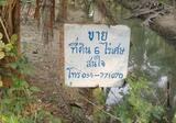 ขายที่ดิน 6 ไร่ 2 งาน 7 ตารางวา ที่ดินสวนมะพร้าว ถนนเข้าถึงสะดวก - DDproperty.com
