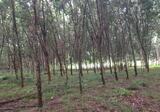 สวนยาง 27ไร่ ขายถูกๆ ไกล้โรงพยาบาลทุ่งสง500 เมตร ห่างจากถนนเอเซีย 100 เมตร - DDproperty.com