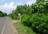 ขายสวนผลไม้สวนผสม 16.5 ไร่ น้ำอ้อม. - DDproperty.com