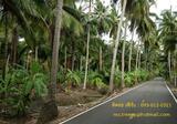 ด่วน ! ขายสวนผลไม้พร้อมที่ดินอำเภอบางคนที สมุทรสงคราม เนื้อที่ประมาณ 4 ไร่ เจ้าของขายเอง (ไม่รับนายหน้านะคะ) - DDproperty.com