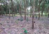 ขายที่ดิน 33 ไร่ 1 งาน ที่ดินมีต้นยางปลูกมาแล้ว10ปี ทีบ้านนาข่า อ.บ้านม่วง จ.สกลนคร - DDproperty.com