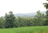 Land in Pua, Nan - DDproperty.com