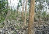 ขายที่ดินสวย ราคาถูก 1-0-96 ไร่ พร้อมต้นสัก 60 ต้น อ.บ้านโป่ง จ.ราชบุรี - DDproperty.com
