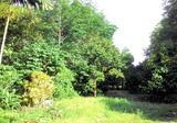 ที่ดินสวย สวนผลไม้ ยางพารา มีโฉนด 14 ไร่ - DDproperty.com
