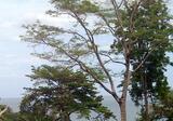 Ocean View / Beachfront, Patong Sea view condominium for sale - DDproperty.com