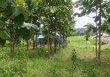 Land in Wiang Pa Pao, Chiang Rai - DDproperty.com