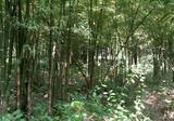 ขายที่ดิน5ไร่อ.ประจันตคามจ.ปราจีน(สวนไผ่) - DDproperty.com