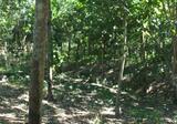 Land in Wiang-Sa, Nan - DDproperty.com