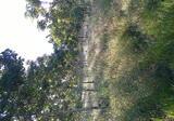 ขายสวนยางพารา,สวนยูคาลิปตัสและที่นา - DDproperty.com