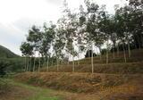ขายที่ดินสวนปาล์ม ยางพารา ผลไม้ ไม้เศรษฐกิจ - DDproperty.com