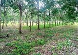 ต้องการขายที่ดิน โฉนด จำนวน 27 ไร่ พร้อมสวนยางพารา ราคาไร่ละ 63000 บาท - DDproperty.com