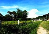 Land in Muang Chiang Rai, Chiang Rai - DDproperty.com
