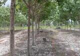 Land in Trakan Phutphon, Ubon Ratchathani - DDproperty.com