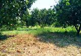 ขายที่สวนมะยงชิด เนื้อที่ 2ไร่ 2งาน ตั้งอยู่ ต.ท่าช้าง อ.เมือง จ.นครนายก ห่างตัวเมืองนครนายกประมาณ 1กม. มีโฉนดพร้อมโอน - DDproperty.com