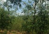 ที่ดินสวยปราจีนบุรี ติดเขาใหญ่ และเขาอีโต้ ใกล้ดาษดารีสอร์ท มีโฉนดทุกแปลง สิ่งแวดล้อมดี บนเนินเขาสวย วิวภูเขา ป่าสมบูรณ์ มีลำน้ำไหลผ่าน - DDproperty.com