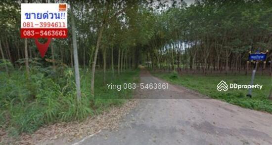 Unnamed Road ที่ดิน วังจันทร์ ติดถนน  หญิง 083-546366 36406139