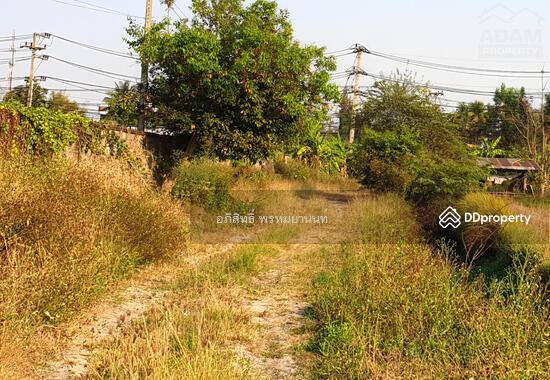 ที่ดิน 57 ไร่ แบ่งขายได้ ติดถนนเชียงใหม่-หางดง (4 แยกหางดง-สะเมิง)  66289986