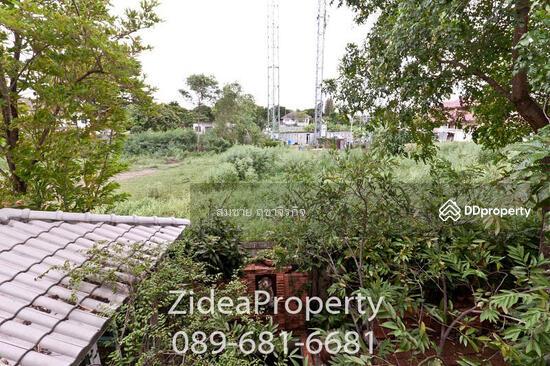 หมู่บ้านต้นไม้ ดอนเมือง  69997444