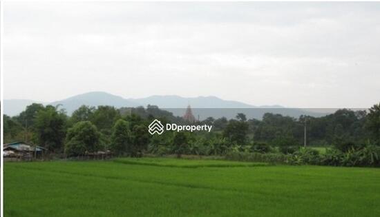 ้บ้านเดี่ยว ธรรมชาติบริเวณรอบๆตัวบ้าน 4377836