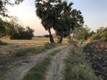 ขายที่สวนมะพร้าว 10 ไร่ ดงจำปา 7 ลพบุรี