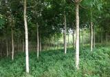 ที่ดินพร้อมสวนยาง จันทบุรี ทำเลดีที่สวย - DDproperty.com