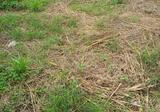 ขายที่ดินเปล่าในหมู่บ้านเมืองประชา ขนาด 20 ตรว. ราคา 199,000 สนใจติดต่อสอบถามต่อรองได้ครับ - DDproperty.com